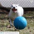 画像15: 【パンクしない特殊構造】愛犬とサッカー!ジョリーサッカーボール