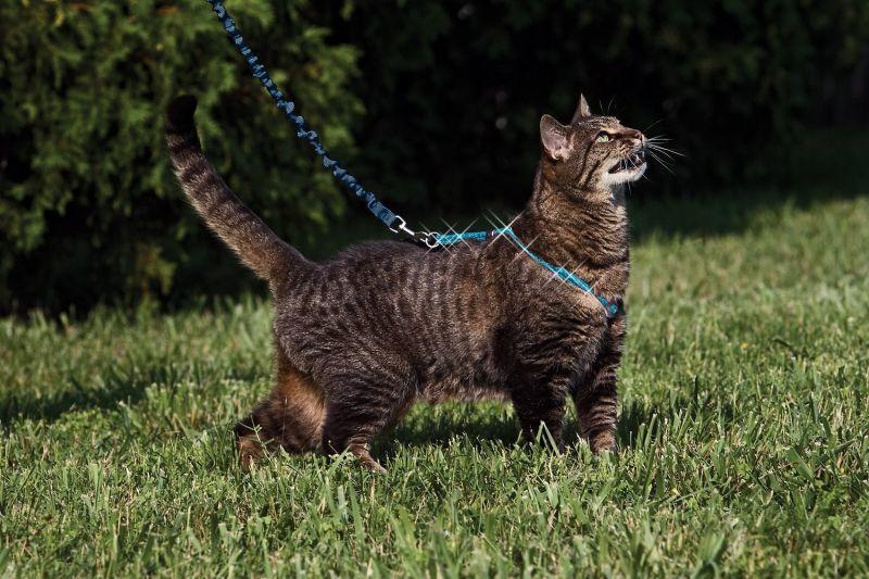 【猫用お散歩】イージーウォーク猫用ハーネス&バンジーリード(限定版キラキラグリッター)