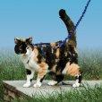 画像2: 【猫用お散歩】イージーウォーク猫用ハーネス&バンジーリード★20%オフ★ (2)