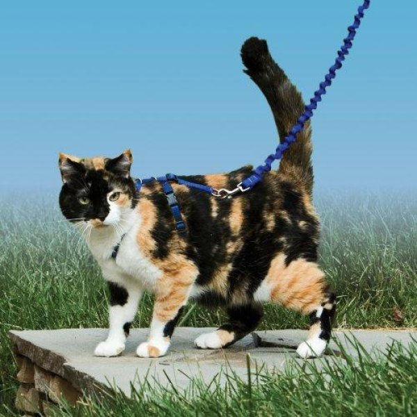 画像2: 【猫用お散歩】イージーウォーク猫用ハーネス&バンジーリード★20%オフ★