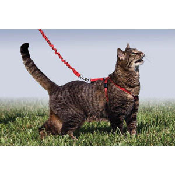 画像4: 【猫用お散歩】イージーウォーク猫用ハーネス&バンジーリード