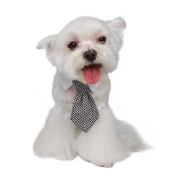 画像3: 【プーチアウトフィッターズ】セレブかわいい犬猫用ネクタイ★半額SALE!★