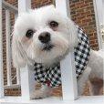 画像1: 【柵越えから愛犬を守るキュートなカラー】パピーバンパー★半額セール! (1)