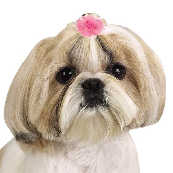 画像2: 【スタイリッシュな犬用リボン】ラッドブライト・フラワーバレッタ