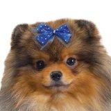【スタイリッシュな犬用リボン】サテンドット&チュールリボンセット