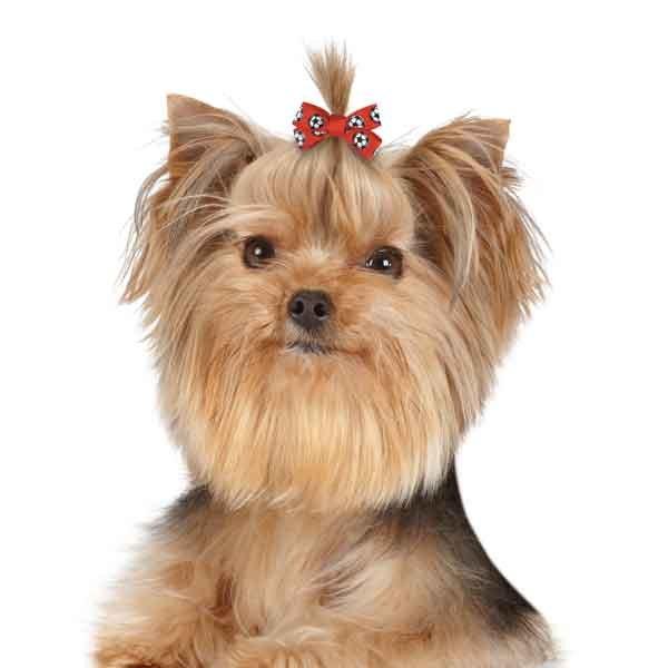 画像2: 【スタイリッシュな犬用リボン】スポーツ柄リボン