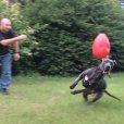 画像7: 【捕まらない丈夫なたまご型ボール】ジョリーエッグ