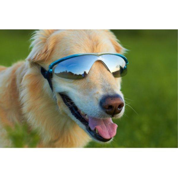 画像1: 【dogglesドグルズ】ラバーフレームK9オプティクス・サングラス