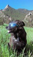 画像3: 【dogglesドグルズ】ラバーフレームK9オプティクス・サングラス