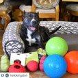 画像12: 【パンクしない特殊構造】愛犬とサッカー!ジョリーサッカーボール