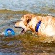 画像10: 【海で浮かんで立ち上がるおもちゃ】ログズ・ポップアップズ (10)