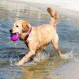 画像16: 【海で浮かんで立ち上がるおもちゃ】ログズ・ポップアップズ