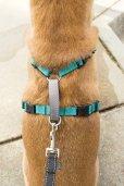 画像12: 【引張り防止・シートベルトと通常ハーネスが一体化】PetSafeスリーインワンハーネス (12)