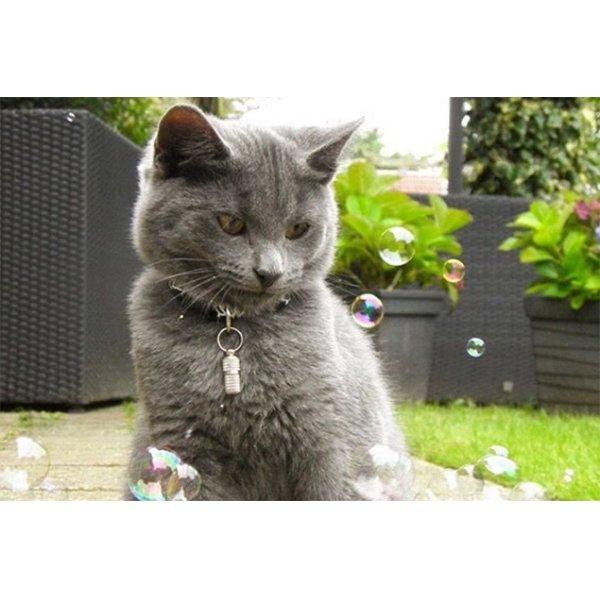 画像4: 【猫が食べられるシャボン玉】キャット・インクレディバブル