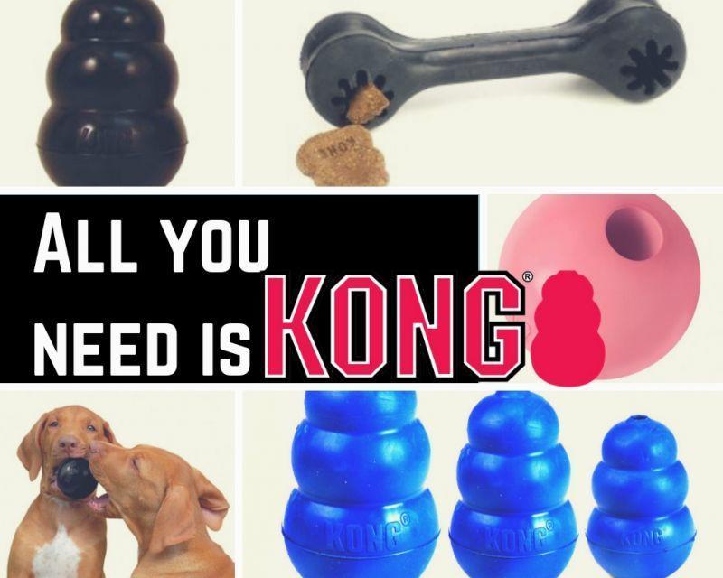 定番KONGで問題行動の90%を解消!!😲