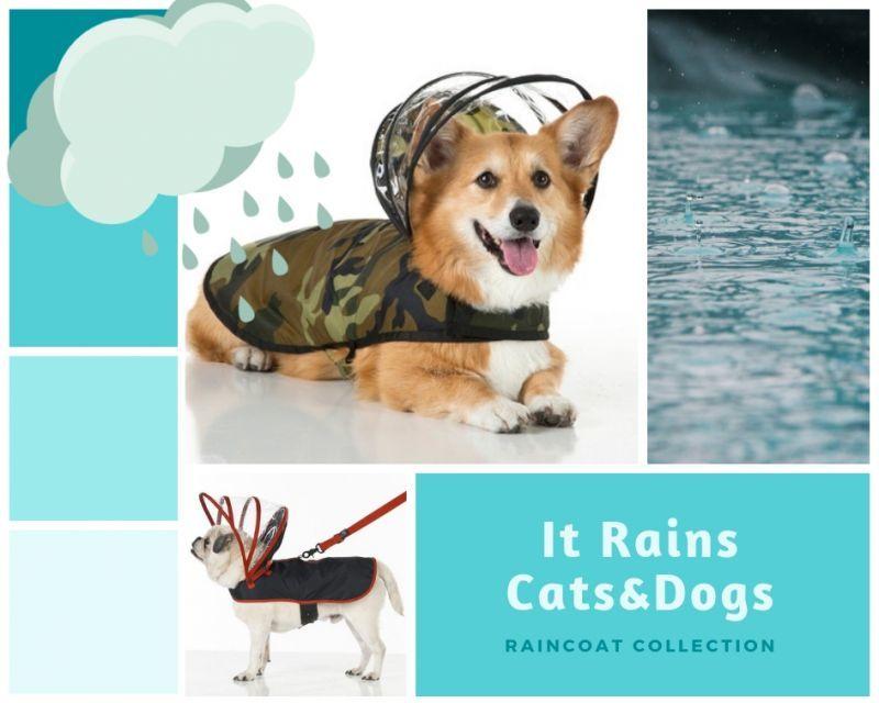 レインコートで雨でもお散歩♪